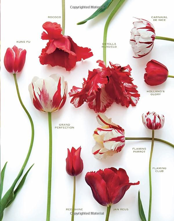 Red tulip varieties: floral board. #tulips #redflowers