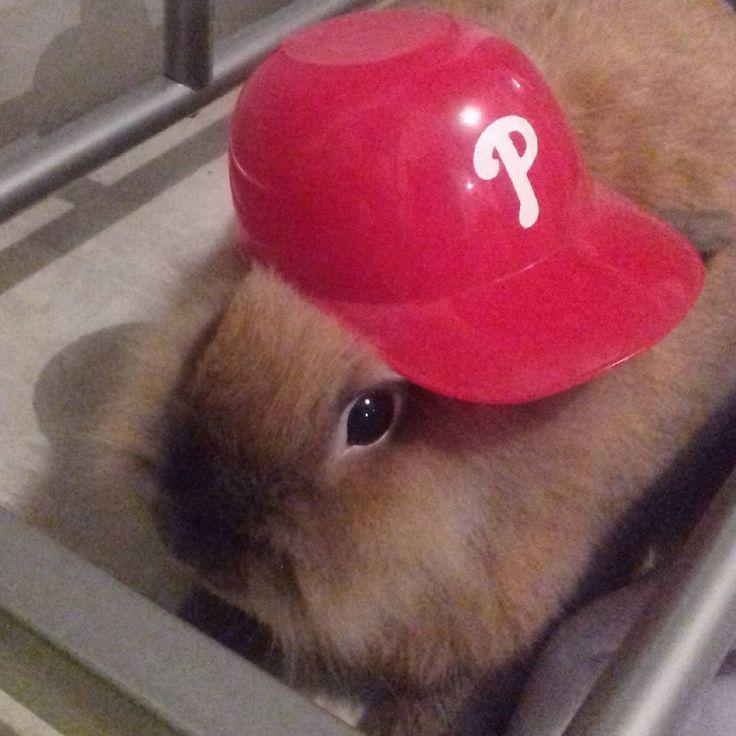 #philly #bunny #helmet #usa #phillies #baseball #cute #rabbit #supporter #philadelphia #sports #americanleague