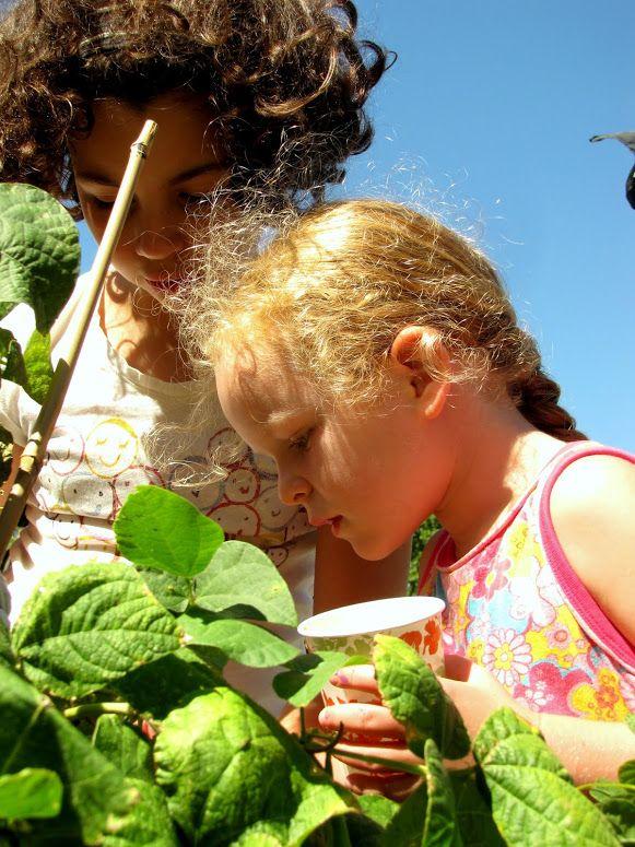 Photo In OSH Garden Aug 28, 2014
