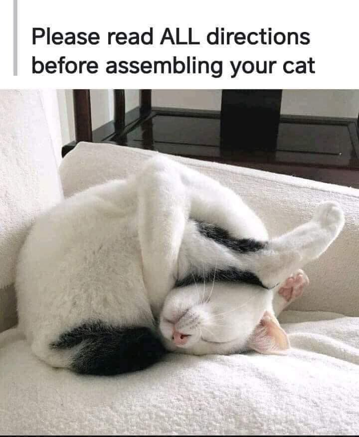 Please Read All Directions Before Assembling Your Cat Funny