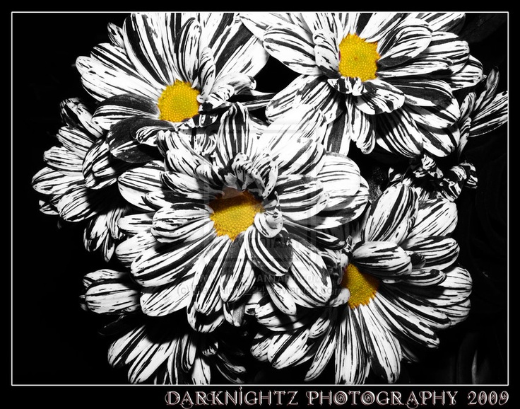 pictures of black and white flowers google search - Black And White Flowers