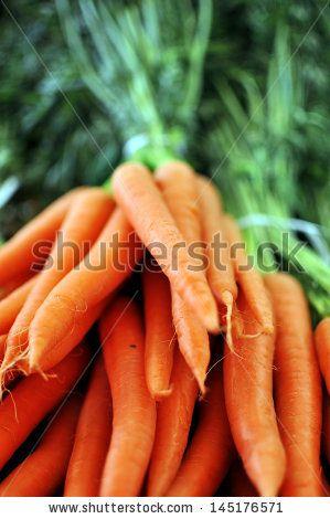 Rustic bunch of carrots