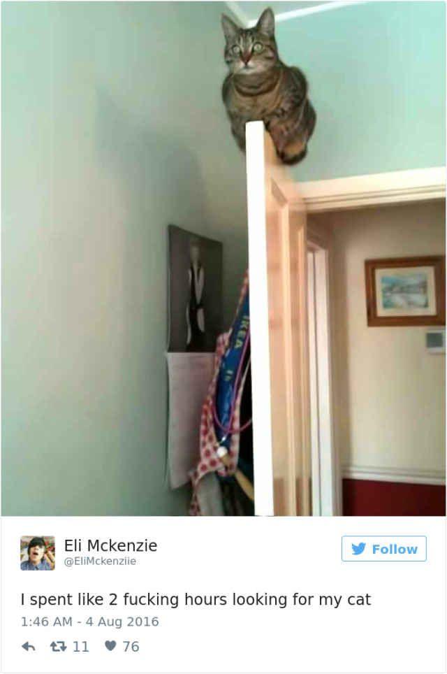 Best Cuando Los Gatos Hablan Los Humanos Callan Images On - The 27 funniest tweets about cats in 2016
