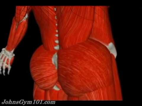 Cool song and animation breaking down the entire muscular system.. awesome!