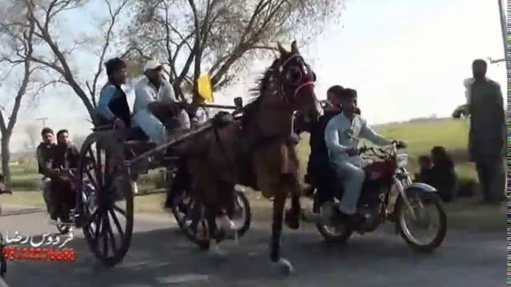 Horse Racing in Pakistan | Tanga Race 2017 (Best Ever Video) | Life Skil...