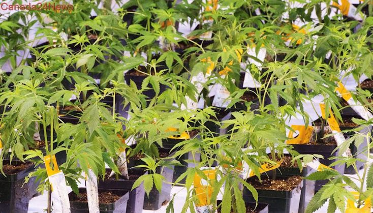 Aurora signs deal for European joint venture with greenhouse vegetable company