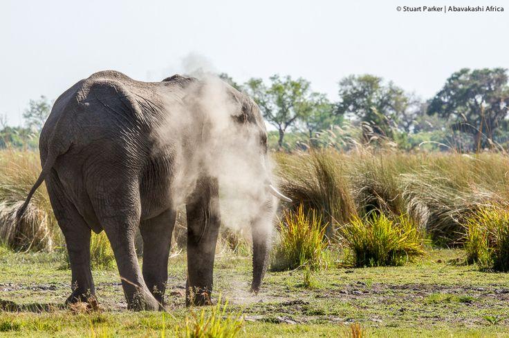 Elephant in the Okavango Delta from Xugana Island Lodge