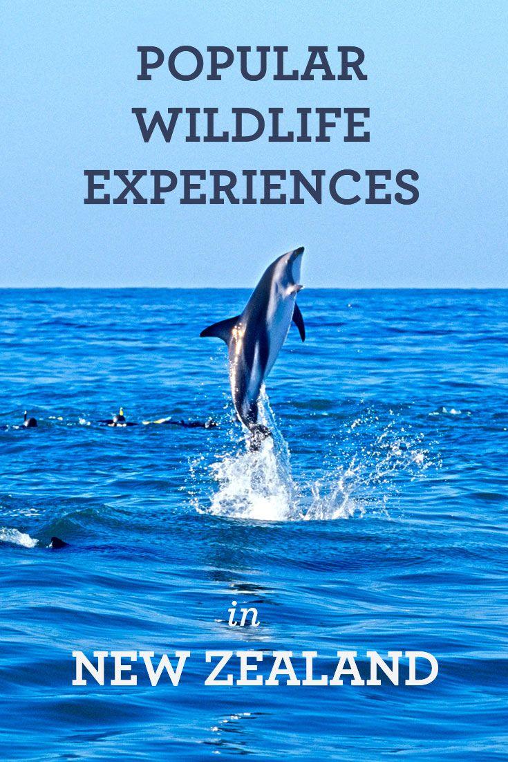 best 20 whale watching destinations ideas on pinterest u2014no signup