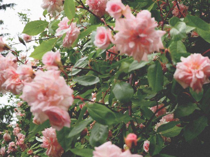 faire livrer des bouquets de fleurs 090 #fleurs #bouquet