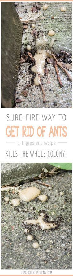 How To Get Rid Of Ants: All you need to kill the whole colony is borax and sugar!