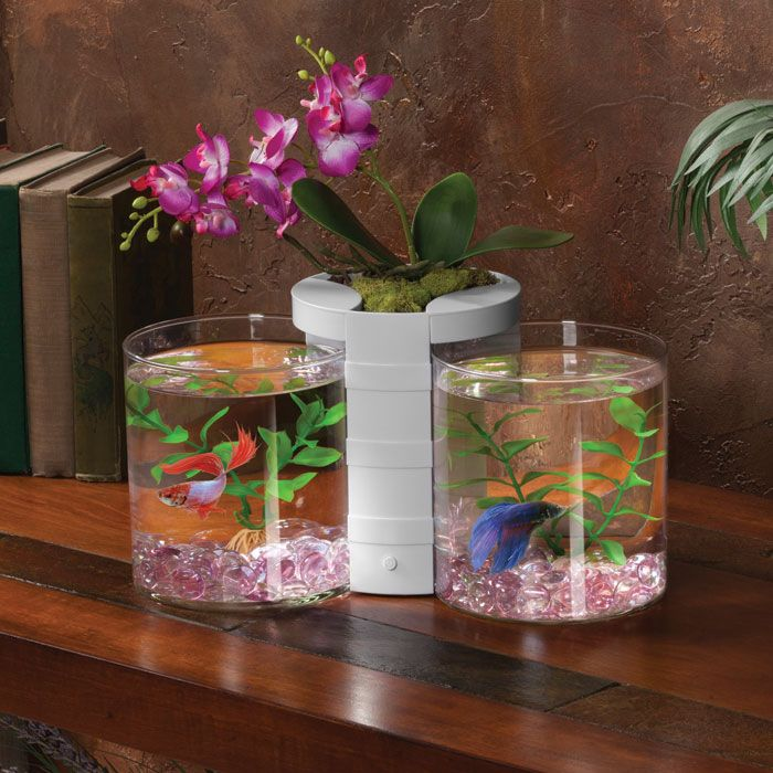 27 best elive pet products images on pinterest fish for Best place to buy betta fish online