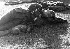"Un ""Hauptfeldwebel"", ou ""Oberfeldwebel der Truppe"" endormi près de son chien"