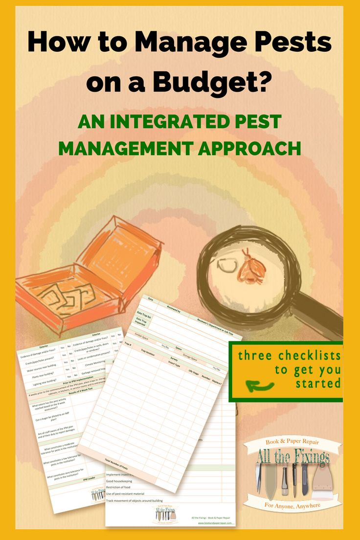 How to Manage Pests on a Budget. This guide is perfect for those starting with pest management in libraries, archives and small museums.