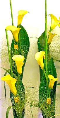 http://holmsundsblommor.blogspot.se/2009/06/gula-kallor.html Gula callor, zantedeschia