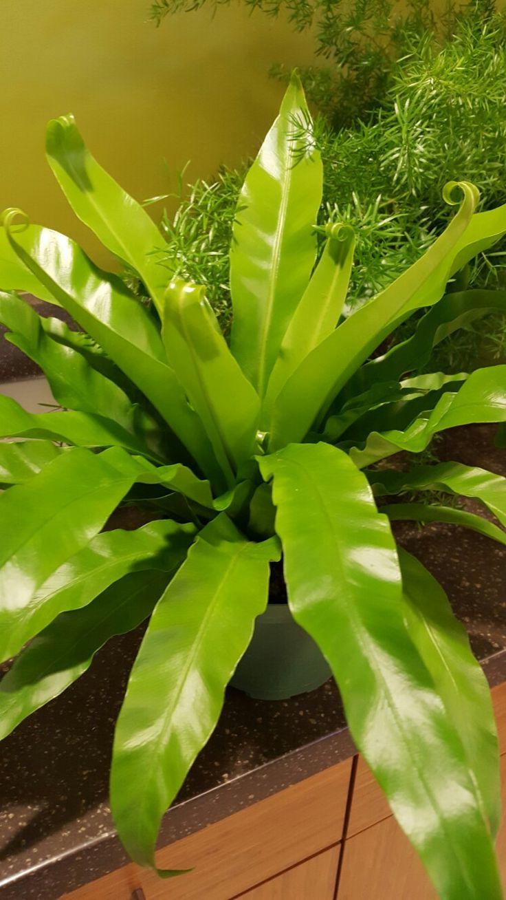 23 best tropical foliage plants images on pinterest