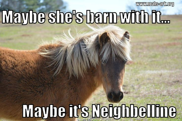 6121ef00cc607da9b5fa6783332074b9 lol memes animal funnies maybe she's barn with it maybe it's neighbelline horse,Funny Barn Memes