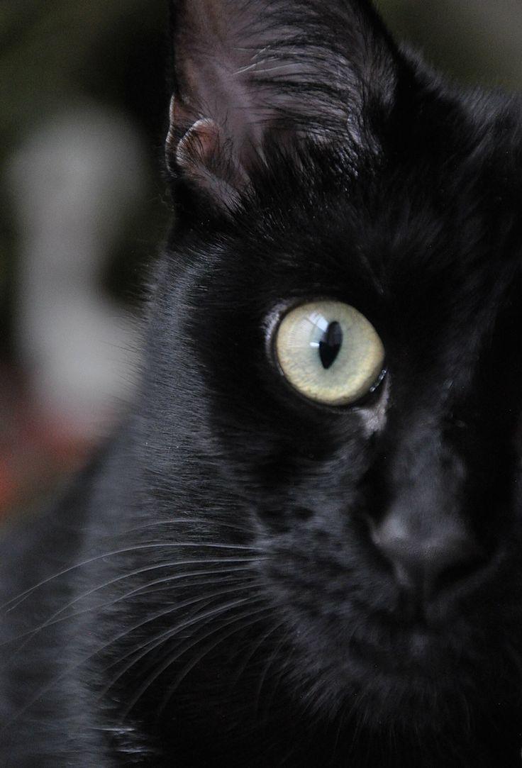 My kitten Isis