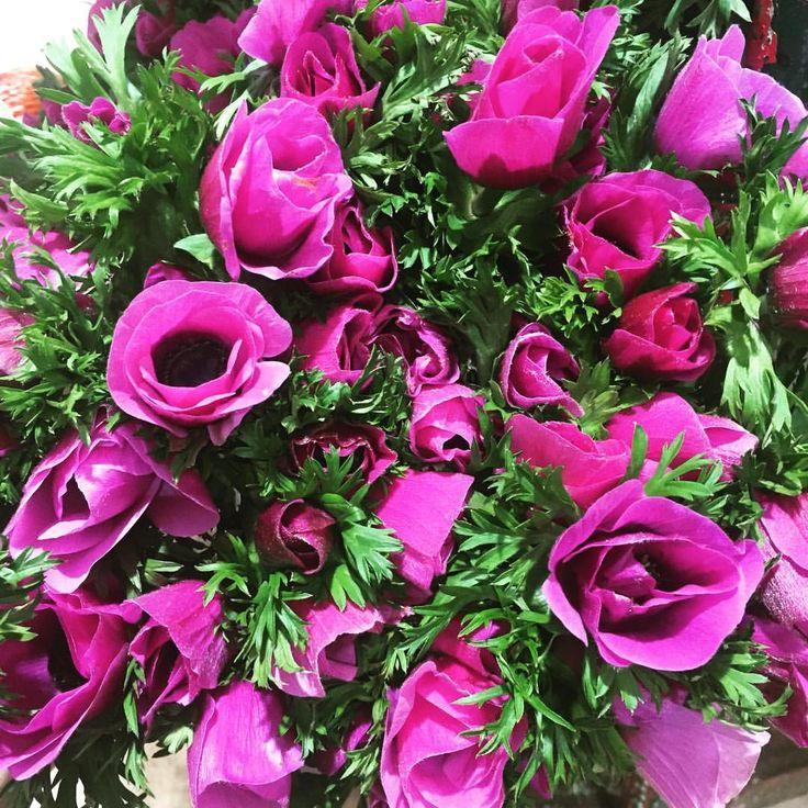 #anemone #france #fleursdefrance #fetedesmamies #penja #minderungis (à Marche Fleurs De Rungis)