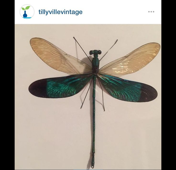 Fly away with me. Gorgeous dragonflies now in store.