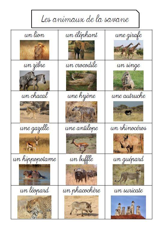 apprendre les animaux de la savane