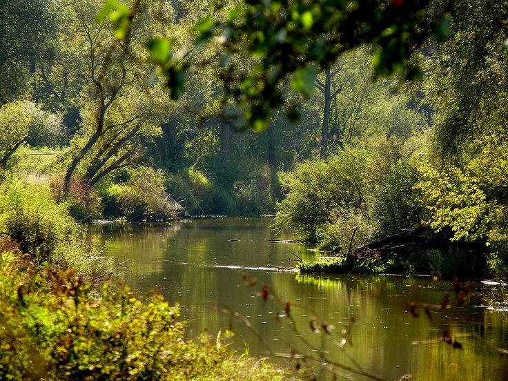 River Barycz near Milicz, Lower Silesia, Poland