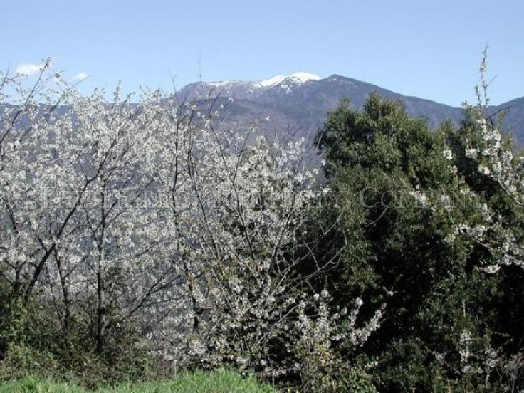 Property for sale in Liguria, Imperia, Isolabona, Italy - http://www.italianhousesforsale.com/view/property-italy/liguria/imperia/isolabona/5758070.html