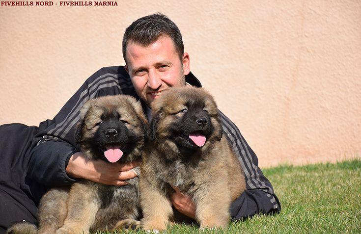 Fivehills Kennel Caucasian dog puppy