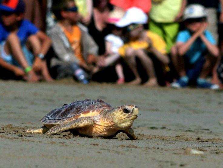 Les 25 meilleures id es concernant aquarium de tortue sur for Carpe koi charente maritime