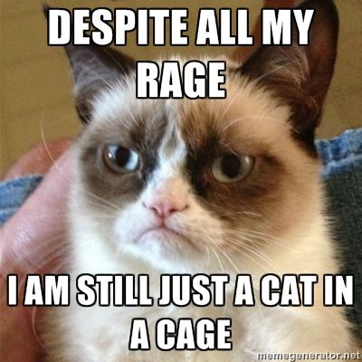 Despite all my rage, I am still just a cat in a cage. (Laughing)