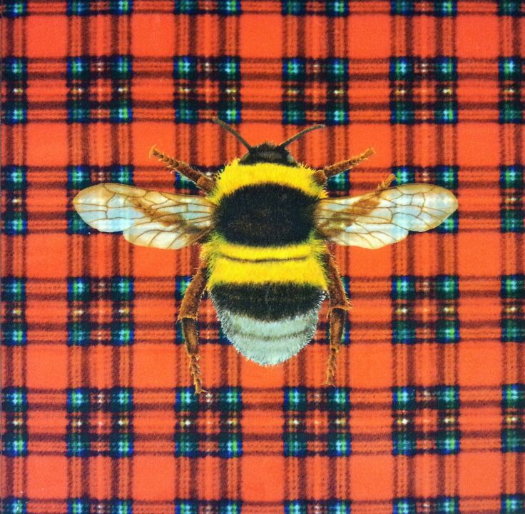 Velvet Bumblebee Royal Stewart Tartan Cushion Panel Red  £6