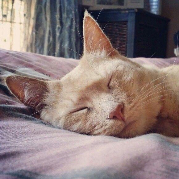 When to going gets tough........the tough take a nap