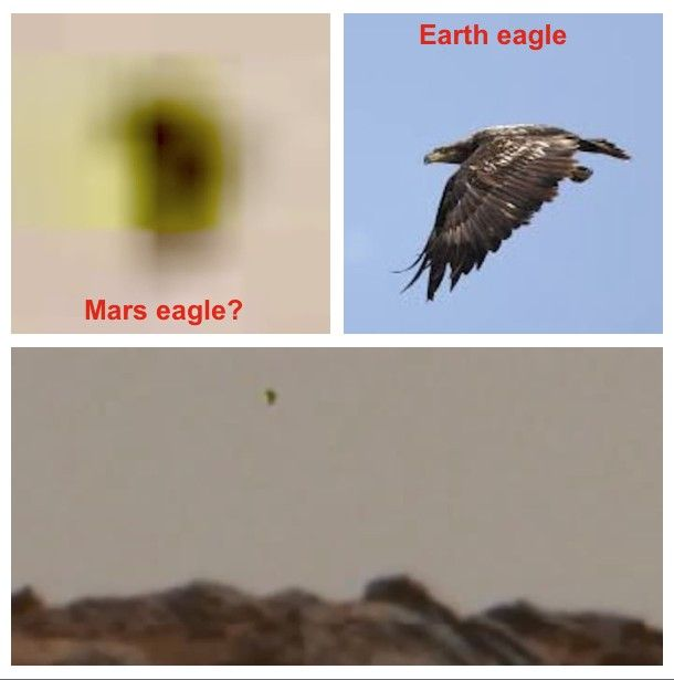 Giant Bird In Flight On Mars Caught In NASA Billion Pixel View, Video  An unidentified flying object (UFO) was caught in a NASA photo and not just any photo but the Billion Pixel View of Mars taken by Curiosity rover. Streetcap1 of Youtube detected and reported on it.