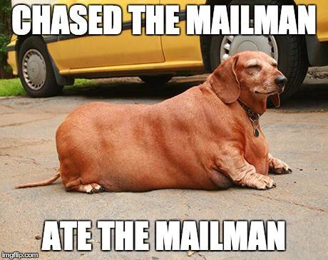 fat dachshund meme 1