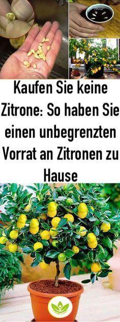 Kaufen Sie keine Zitrone: So haben Sie einen unbegrenzten Vorrat an Zitronen zu