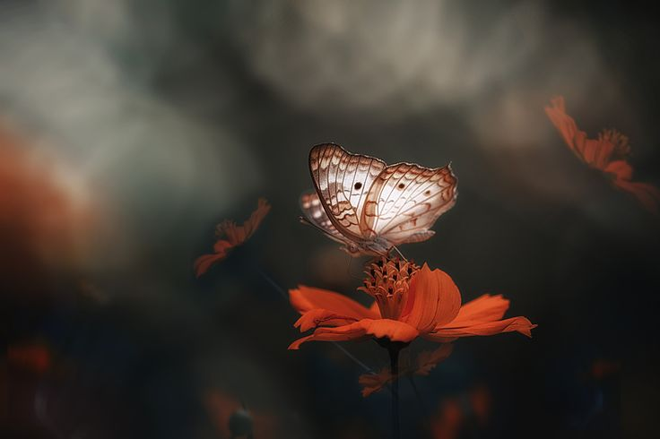 Crazy for you by Eleonora Di Primo on 500px