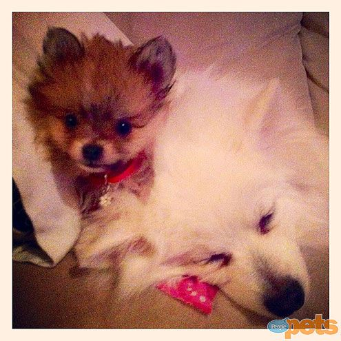 The Cutest Pets on Twitter This Week! - BUSY BODIES - Twitter Pics : People.com - My babies Foxy & Bella! #cutepic