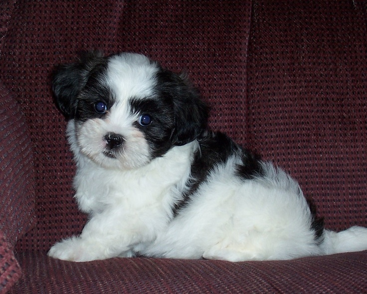 multipoo. want thiss Cutee animals, Cute animals, Puppies