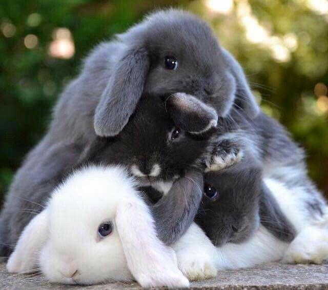 A mountain of bunnies