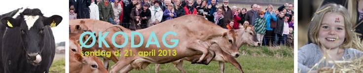 Økodag. Afholdes hvert år i foråret hvor køerne sendes på græs. Der er over hele landet en række økologiske gårde, som holder åbent hus, og samtidig er der smagsprøver på økologisk kød og mejeriprodkter på gårdene