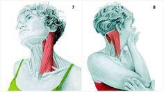 SMC 7.Flexion du cou latérale Sterno-cléido-mastoïdien « SMC ». Garder cou le plus longtemps possible tout en laissant tomber lentement l'oreille à l'épaule. Attention et éviter tassement vertébral. 8.Rotation extensible du cou SMC Rotation lente cou, en gardant menton légèrement plus élevé pour isoler SMC. Attention et éviter tassement vertébral.  Etirement plus profond: appliquer pression avec main opposée