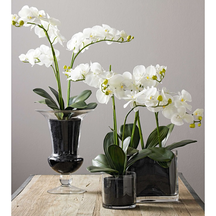I LOVE orchids