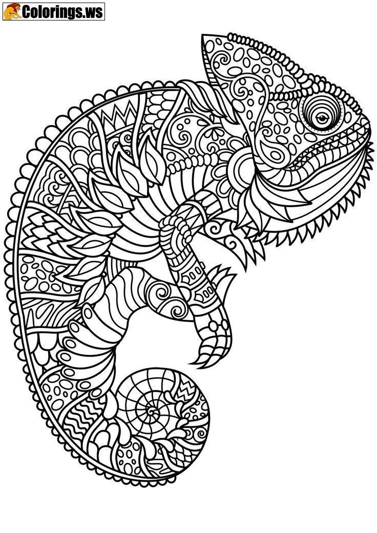 Animal Peacock Mandala Coloring Pages Mandala Coloring Pages