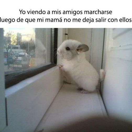 Snif ... Snif ... #memes #chistes #chistesmalos #imagenesgraciosas #humor http://www.megamemeces.com/memeces/imagenes-de-humor-vs-videos-divertidos