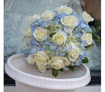 Hand tied bouquet of light blue hydrangea and white roses.