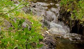 Arroyo de aguas cristalinas
