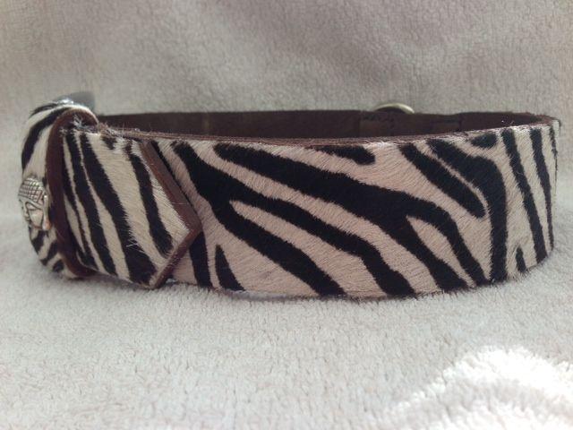 Zebra Halsband.