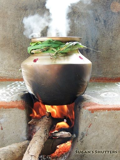 Thai Pongal Mattu Kanum And Bhogi How They Are Celebrated Recipes For Sakkarai