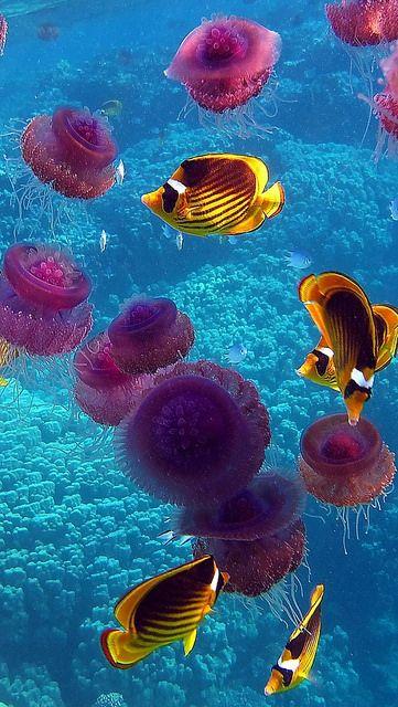 fish_jellyfish_underwater_swim