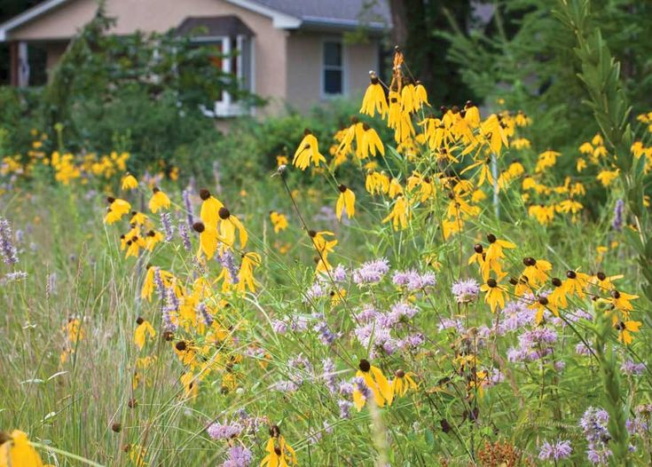 Best 25 prairie garden ideas on pinterest perennial for Landscaping without plants