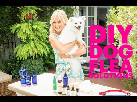 Anti-flea products can be SO harmful for your home and family ... Think of how your kids love to rub and cuddle your pets!! So, I'm sharing my weekly flea solutions for my two lovely pets at home. These DIYs are so easy, and SO healthy, because I'm using natural ingredients and essential oils to do all the heavy lifting!! Check out my DIY dog flea solution recipes on my YouTube: https://www.youtube.com/watch?v=32rgpyUWC2k